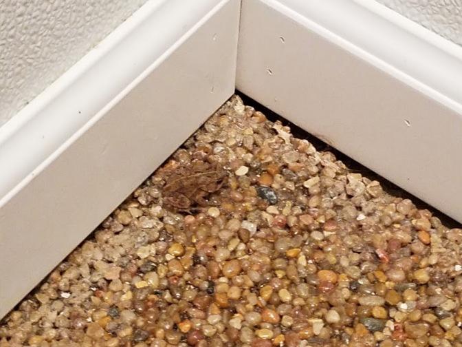 shower frog