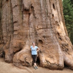 The Wonder of the Giant Forest – Sequoia National Park