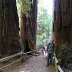 Off the Beaten Path at Muir Woods National Monument