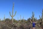 Saguaro National Park: Signal Hill Trail