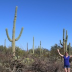 Saguaro National Park: Signal Hill Trail