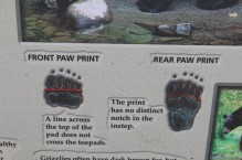 Grizzly prints